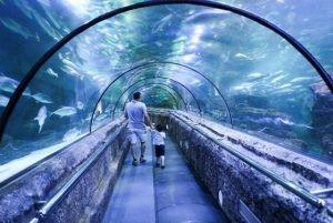 Seaworld Adventure - 2