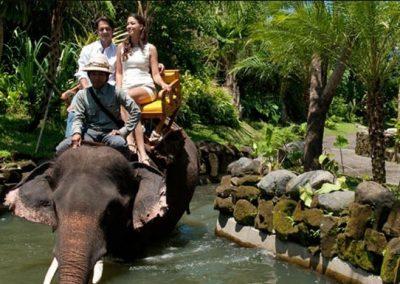 Taman Safari Adventure -1
