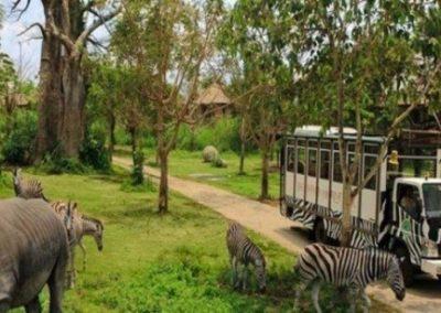 Taman Safari Adventure -2
